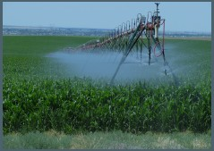 Irrigated Crops